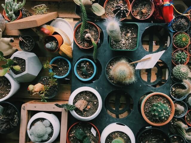 come vendere piante online